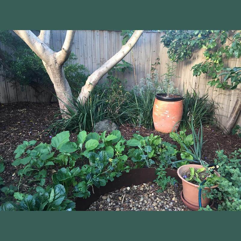 Garden redesign veggies