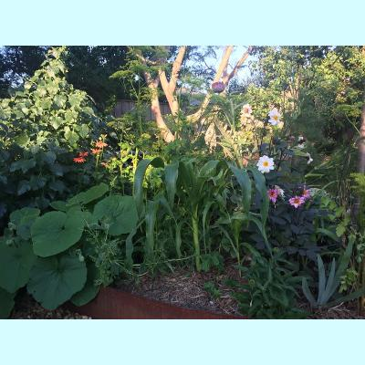 Garden refresh - happy veg, flowers and fruit and three sisters