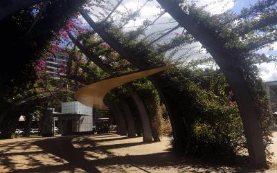 Bougainvillea Walkway