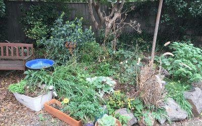 autumn garden veges