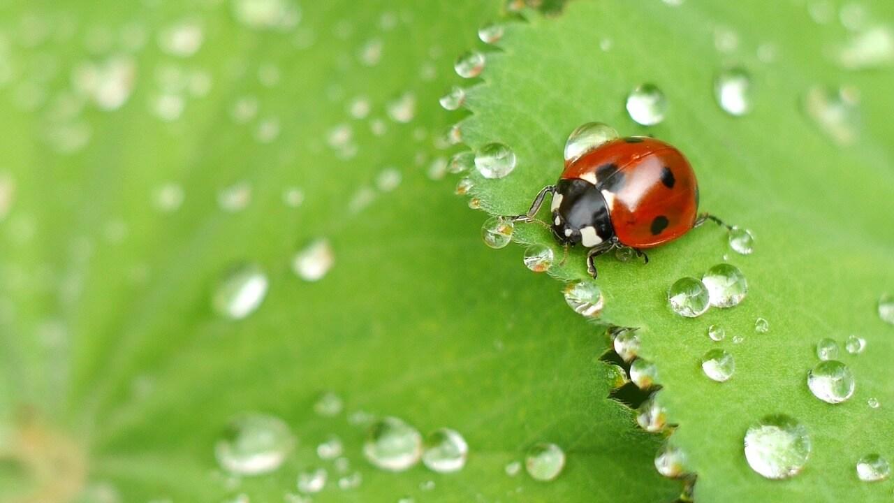 ladybug 775X1280 1